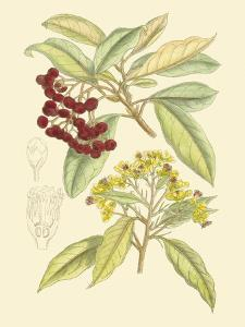 Berries and Blossoms I by Samuel Curtis