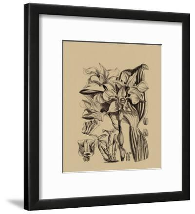Black and White Curtis Orchid V