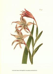 Curtis Floral I by Samuel Curtis