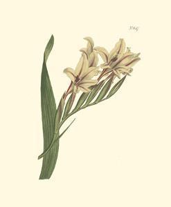 Curtis Floral II by Samuel Curtis