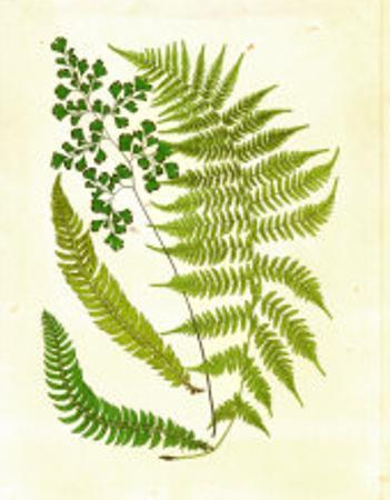 Fern with Crackle Mat II