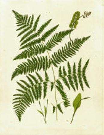 Fern with Crackle Mat IV