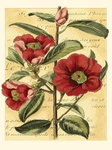 French Camelia by Samuel Curtis