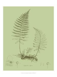 Fresh Ferns II by Samuel Curtis