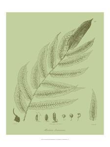 Fresh Ferns III by Samuel Curtis