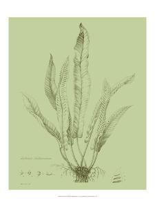 Fresh Ferns IV by Samuel Curtis