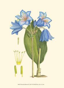 Periwinkle Blooms II by Samuel Curtis