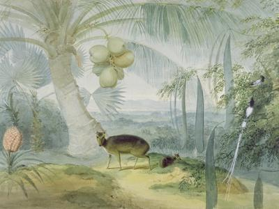 A Landscape in Ceylon, with Barking Deer and Fawn and a Pair of Paradise Fly-Catchers, C.1808-11