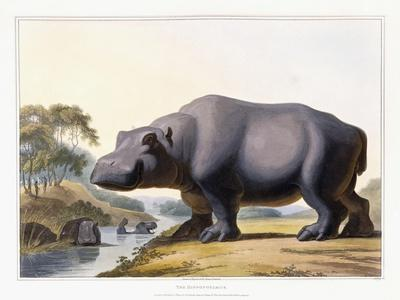 The Hippopotamus, 1804