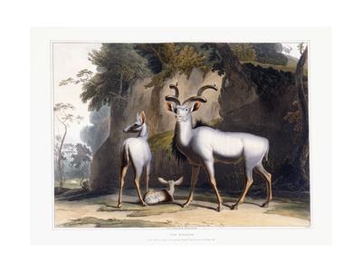 The Koodoo, 1804