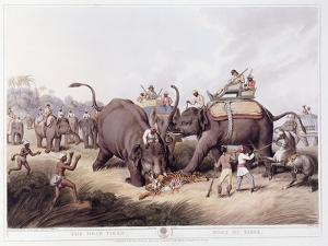 The Dead Tiger; Mort Du Tigre, 1807 by Samuel Howitt