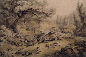 Wild Dogs Attacking a Tiger by Samuel Howitt