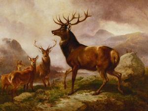 A Proud Stag by Samuel John Carter