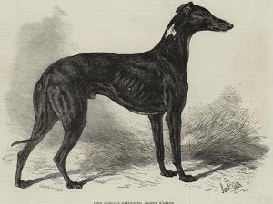 Lord Lurgan's Greyhound, Master M'Grath by Samuel John Carter
