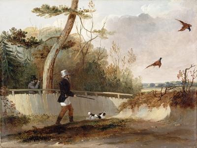 Pheasant Shooting