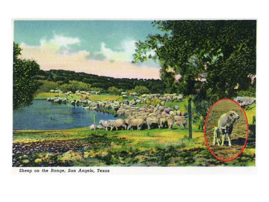 San Angelo, Texas - View of Sheep on the Range, c.1948-Lantern Press-Art Print