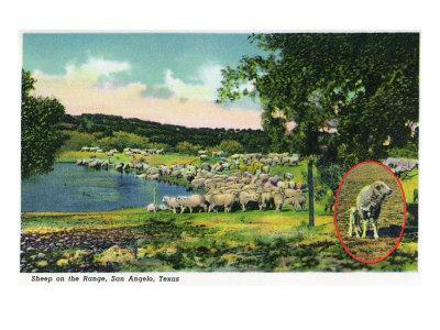 https://imgc.artprintimages.com/img/print/san-angelo-texas-view-of-sheep-on-the-range-c-1948_u-l-q1got5y0.jpg?p=0