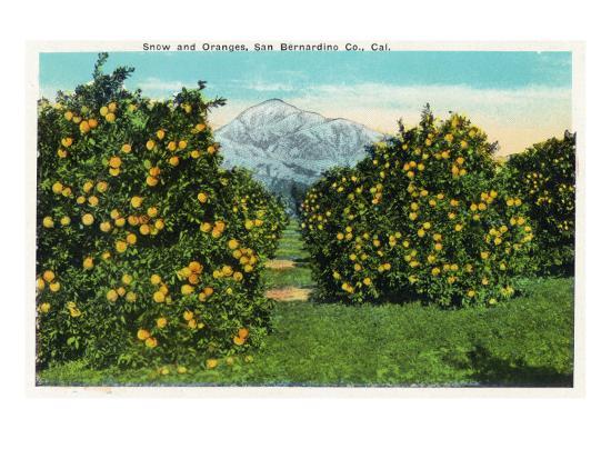 San Bernardino County, California - View of Snow-Capped Mountains and Orange Trees, c.1921-Lantern Press-Art Print