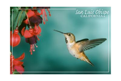 San Luis Obispo, California - Rufous Hummingbirds-Lantern Press-Art Print