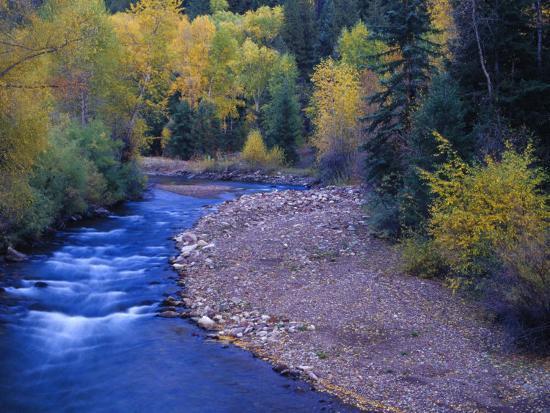 San Miguel River and Aspens in Autumn, Colorado, USA-Julie Eggers-Premium Photographic Print