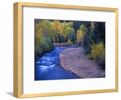 San Miguel River and Aspens in Autumn, Colorado, USA-Julie Eggers-Framed Photographic Print
