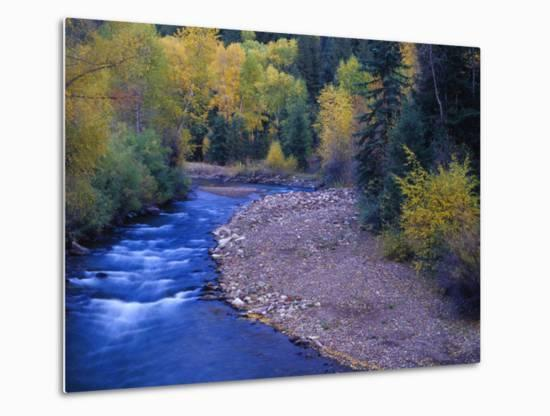 San Miguel River and Aspens in Autumn, Colorado, USA-Julie Eggers-Metal Print