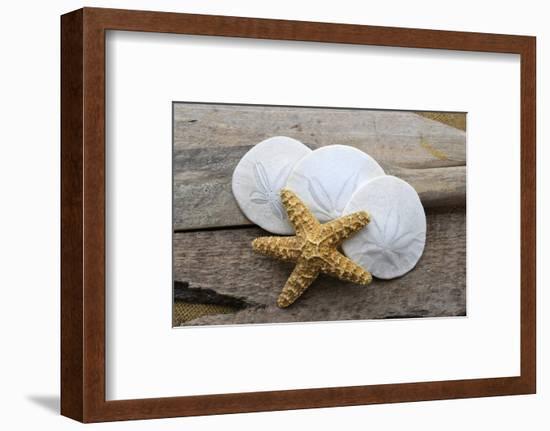 Sand dollar and starfish still-life-Savanah Plank-Framed Photographic Print