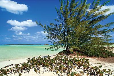 Sand Dollar Beach-Larry Malvin-Photographic Print