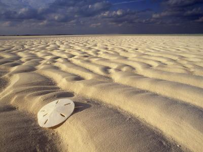 Sand Dollar Lies on a Sandy Beach-Michael Melford-Photographic Print