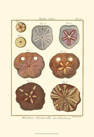 Sand Dollars II-Diderot-Art Print