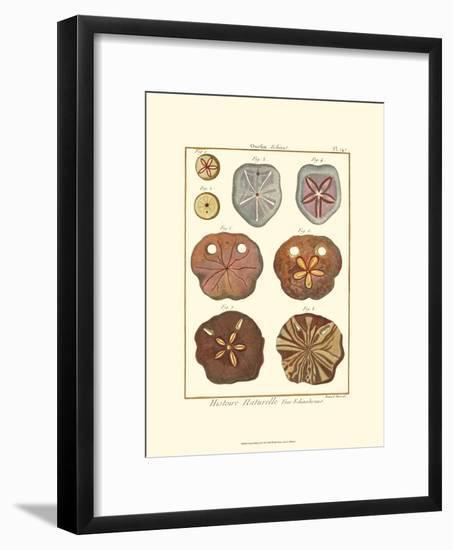 Sand Dollars II-Diderot-Framed Art Print