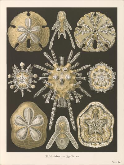 Sand Dollars-Found Image Press-Art Print