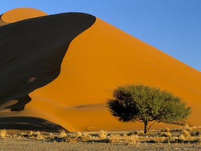 Sand Dune, Sossusvlei Dune Field, Namib-Naukluft Park, Namib Desert, Namibia, Africa-Steve & Ann Toon-Photographic Print