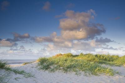Sand Dune with Beach Grass in the Wattenmeer in the Evening Light, Schillig, North Sea-Axel Ellerhorst-Photographic Print