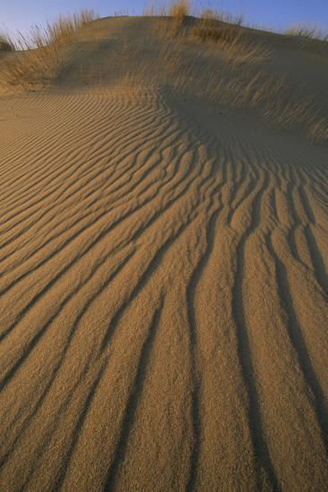 Sand Dune with Ripples Created by Wind-Norbert Rosing-Photographic Print