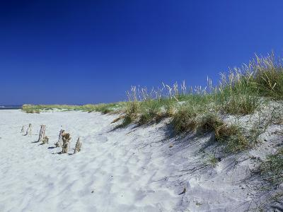Sand Dunes and Marram Grass, West Sussex, UK-Ian West-Photographic Print