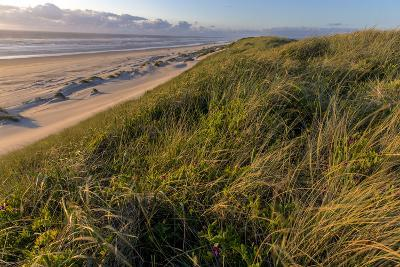 Sand Dunes and Pacific Ocean in the Oregon Dunes NRA, Oregon-Chuck Haney-Photographic Print