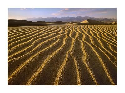 Sand dunes, Death Valley National Park, California-Tim Fitzharris-Art Print