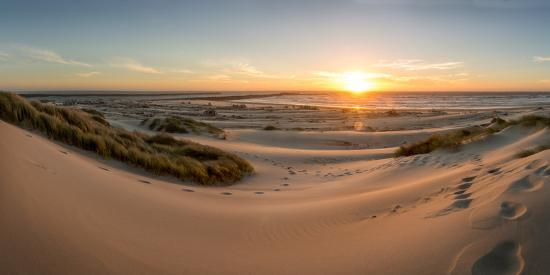 Sand dunes, grass, and driftwood at sunset on the Oregon coast, Oregon, United States of America, N-Tyler Lillico-Photographic Print
