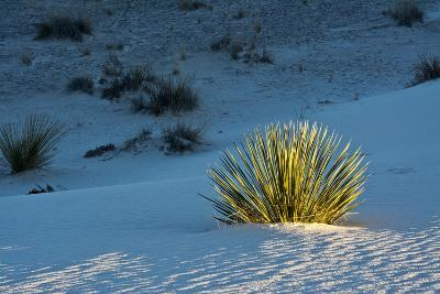 Sand Patterns, Yucca, White Sands Nm, Alamogordo, New Mexico-Michel Hersen-Photographic Print