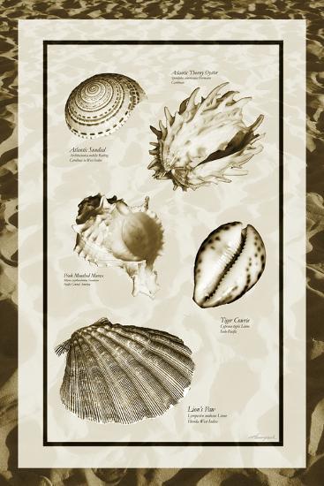 Sand & Shells II-Alan Hausenflock-Photo