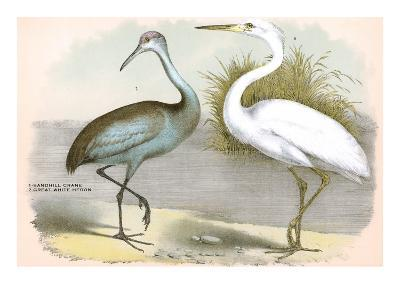 Sandhill Crane, Heron--Art Print