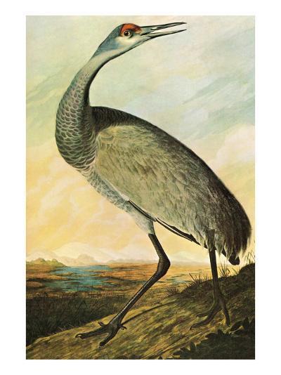 Sandhill Crane-John James Audubon-Art Print