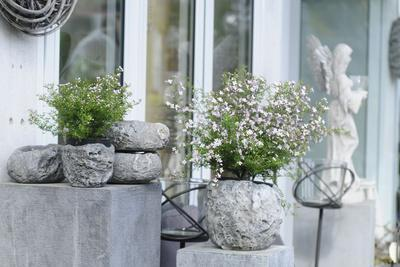 Potted plants in stone pots as garden decoration