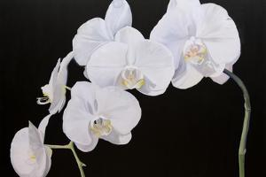 Dramatic Orchids I by Sandra Iafrate