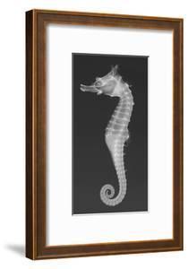 Dhiho'S Seahorse by Sandra J^ Raredon