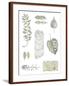 Botanical Studies by Sandra Jacobs