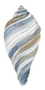 Coastal Seashells - Tulip by Sandra Jacobs