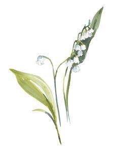 Lily of the Valley I by Sandra Jacobs