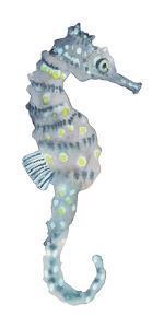 Pretty Seahorse by Sandra Jacobs